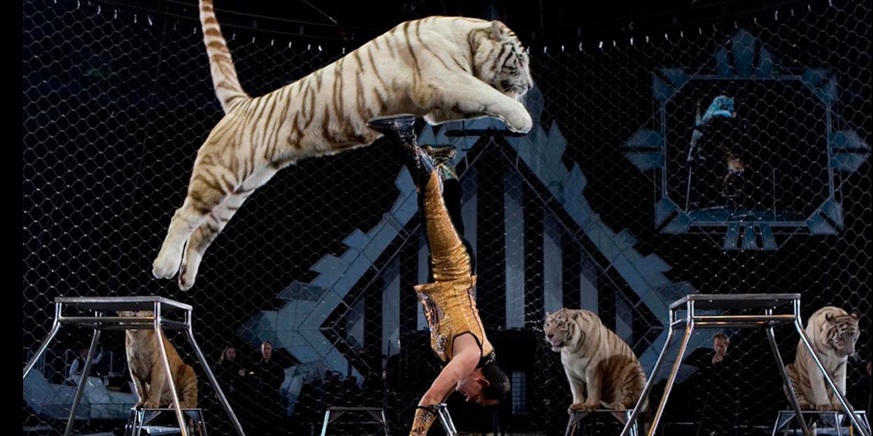 Resultado de imagen de prohibicion de los circos y venta de animales